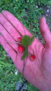 Beeren aus dem Wald