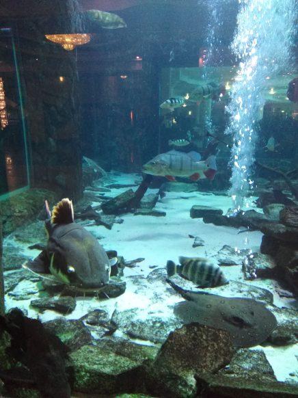 Hotel Gołębiewski - Aquarium so groß wie anderswo ein Doppelzimmer